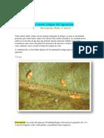 Principales plagas del aguacate (porfirioB).pdf