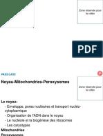 NoyauMitochPerox