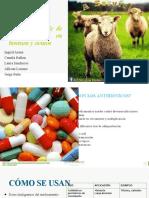 Uso  responsable de antibioticos en bovinos y ovinos en Colombia.