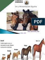 Alimentacion y requerimientos nutricionales en Equinos