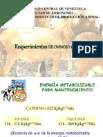 Requerimientos de ovinos y caprinos
