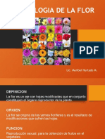 Tema 10 MORFOLOGIA DE LA FLOR - copia
