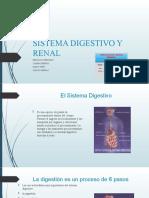 sistema digestivo y renal