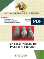 ANTRACNOSIS EN PALTO Y FREJOL