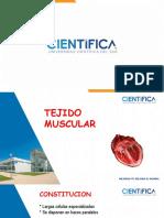 06-Tejido Muscular 2020-I