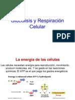 6Glucolisis-Respiracion