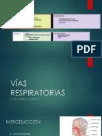 VIAS RESPIRATORIAS - Sin epitelio respiratorio ni olfatorio