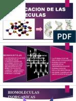 clasificacion de las biomoleculas