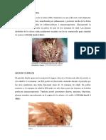 BURSITIS INFECCIOSA.sem. 1. Leidy Chela