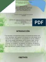 PROYECTO DE AULA TERCERA ENTREGA LOGICA
