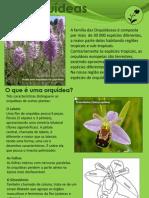 As Orquídeas da região de Vila Franca de Xira