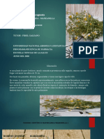 diapositiva  farmacognosia