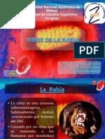 Mgii Virus de La Rabia