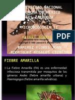 2752-MGII-FIEBRE AMARILLA