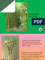 El bambu japonés