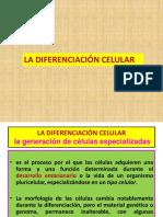 1La Diferenciación Celular