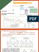 ácidos nucleicos part 1.pdf