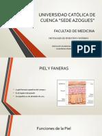 1. PIEL Y FANERAS