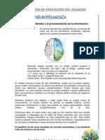 3 hemisferios cerebrales