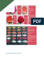 afiche e informacion para presentacion