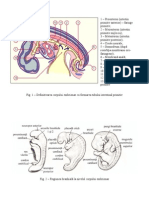examen embrio
