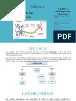 5, P3 Clase 2 neurona (1)