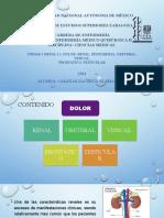 1.1 DOLOR RENAL SEUDORENAL URETERAL VESICAL PROSTÁTICO TESTICULAR.pptx