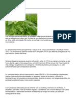 775-el-cultivo-del-pimiento