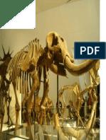 mamute esqueleto