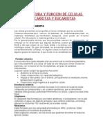 ESTRUCTURA Y FUNCION DE CELULAS PROCARIOTAS Y EUCARIOTAS