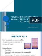 Adaptaciones celulares, lesion celular y muerte celular