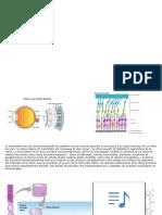 Récepteurs couplés au protéines G partie 2