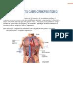 aparato-cardiorrespiratorio.pdf