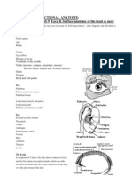 human function anatomy