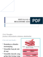 histologi otot dan mekanisme kerja oto