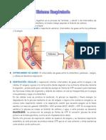 Respiracion_CTF