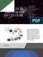 NIVELES DE ORGANIZACIÓN CELULAR PARTE 1.pptx