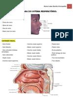 Anatomia do Sistema Respiratório.pdf