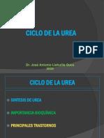 14-Ciclo-ureaimportancia_y_trastornos_2020.pdf