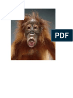 Portraits of Primates