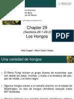 5-HONGOS
