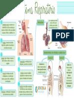 Mapa-mental-Sistema-respiratório.pdf