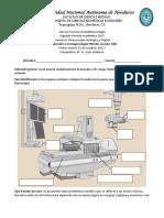 examen del fluroscopia.pdf