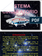 SISTEMA CIRCULATORIO MARCO