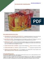 Infecciones de la Piel y Tejidos Blandos, generalidades