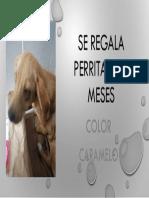 Presentación(1)
