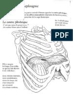 Anatomie - diaphragme et voies repiratoires