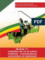 5-2-11 Module 11.pdf