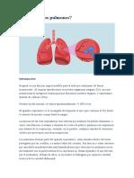 Cómo son los pulmones.docx