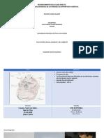 CARACTERÍSTICAS GENERALES DE LOS ÓRDENES DE IMPORTANCIA AGRÍCOLA JUAN CLAROS.pdf